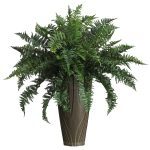Indoor Plants for your Business