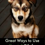 Great Ways to Use Essential Oils for Your Dog