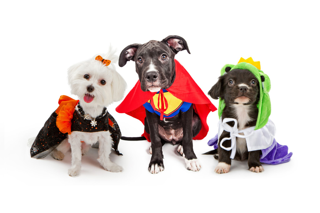 Three cute little puppy dogs dressed up in Halloween costumes including a witch, super hero and frog prince