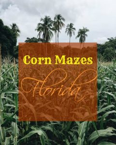 Fun Corn Mazes in Florida