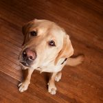 Best Pet-Friendly Flooring Guide