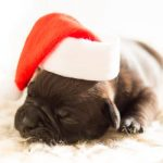 Getting Crafty with the Pet Holiday Experience