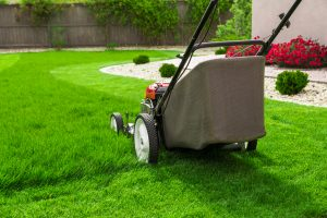 10 year round lawn care tips