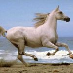 Horse And WildlifeGifts