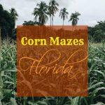 Fun Corn Mazes in Florida