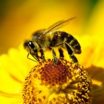 5 Effective Ways to Get Rid of Bees Naturally?