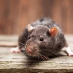 The Most Effective Way To Keep Rats Out Of Your Pantry